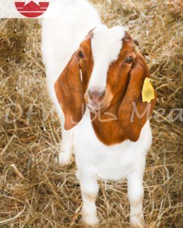 Zabiha Halal Farm Fresh Goat